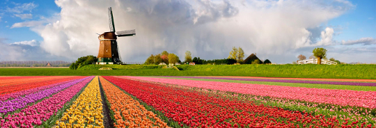 2014_Windmill and Tulips