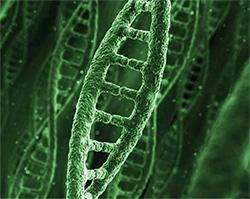 Genome-Arabica-250