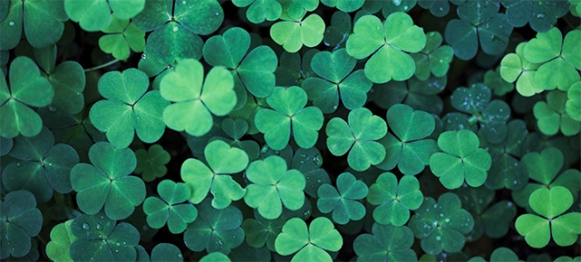 Saint-Patricks-Day-Clover
